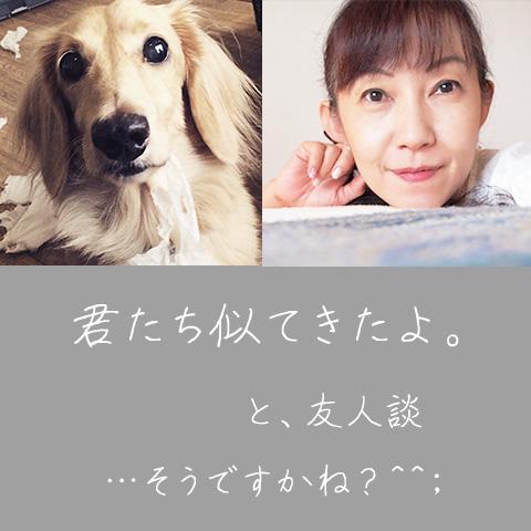 Adoyako